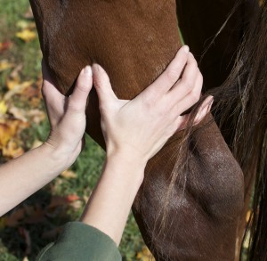 equine massage hind limb