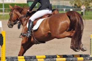 horse jumping